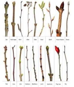 Winter Botany Walk in Burnet @ Burnet Woods, Trailside Nature Center