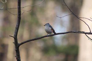 Kid 4 Birds! @ Burnet Woods - Trailside Nature Center | Cincinnati | Ohio | United States
