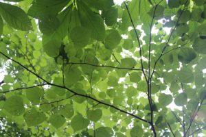 Tree & Wildflower Hike @ Burnet Woods - Trailside Nature Center | Cincinnati | Ohio | United States